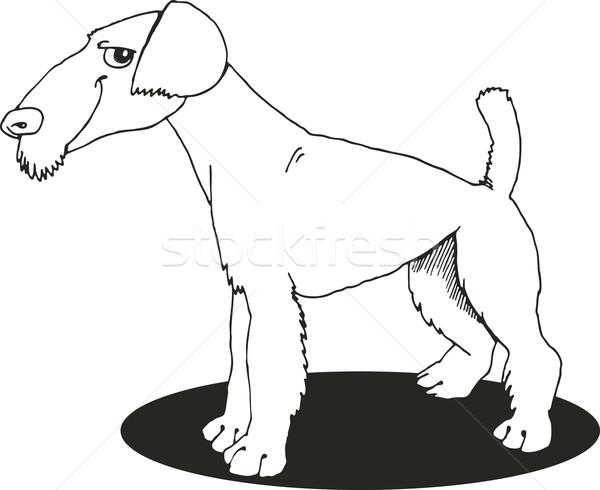 Terrier livro para colorir ilustração cão engraçado desenho Foto stock © izakowski