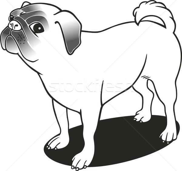 purebred pug for coloring book vector illustration  Igor Zakowski
