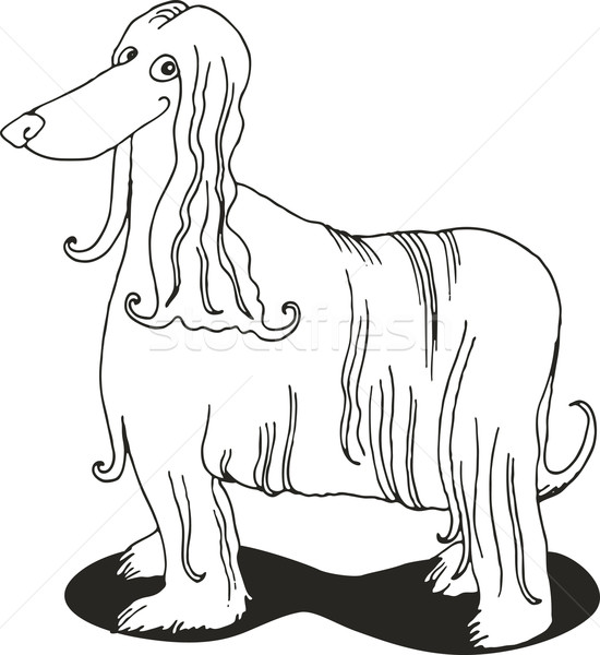 Afghan hound for coloring book Stock photo © izakowski