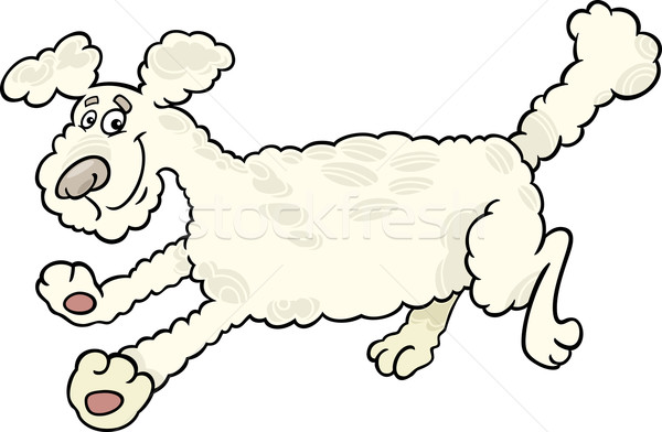 running poodle dog cartoon illustration Stock photo © izakowski