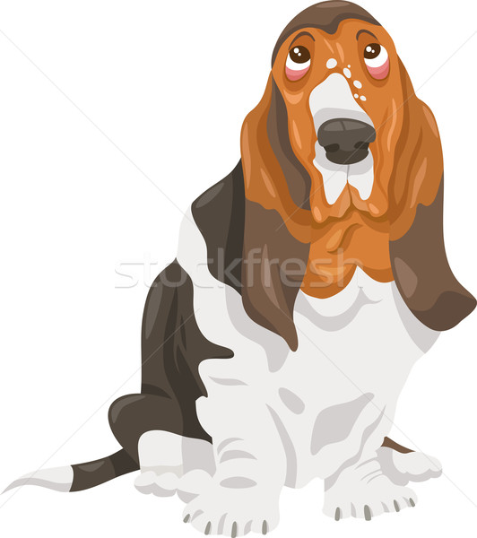 basset hound dog cartoon illustration Stock photo © izakowski
