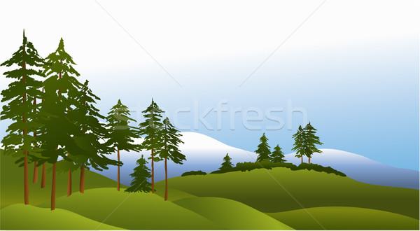 Zielone lasu sosny góry wektora krajobraz Zdjęcia stock © jagoda