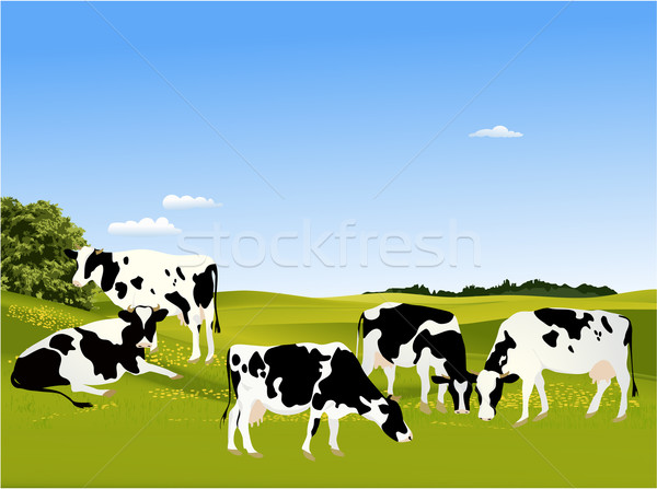 Vacas animal projeto fundo fazenda leite Foto stock © jagoda