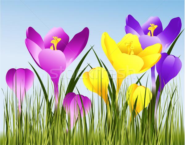 春の花 新鮮な 春 草 自然 庭園 ストックフォト © jagoda