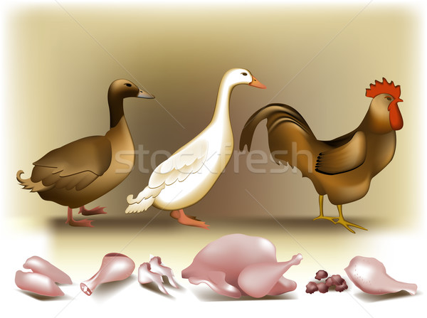 Poultry and white meat Stock photo © jagoda