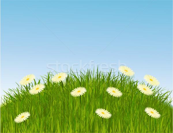 ストックフォト: 草原 · 草 · 自然 · 緑の草 · デイジーチェーン · 花