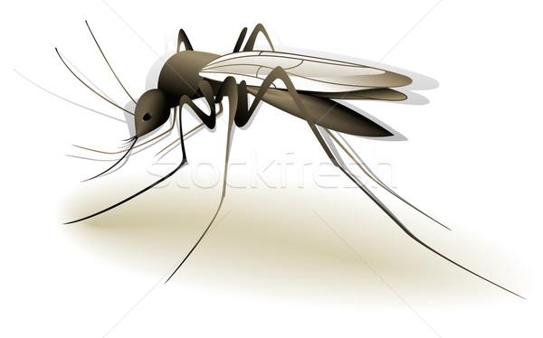 Zanzara illustrazione pericoloso insetto animali pericolo Foto d'archivio © jagoda