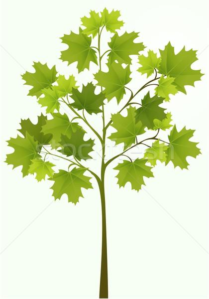 Ilustração simples vetor árvore abstrato folha Foto stock © jagoda