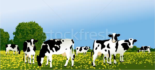 Photo stock: Blanc · noir · vaches · troupeau · vert · domaine · alimentaire
