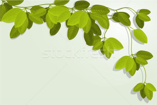 Natura ivy foglie verde design foglia Foto d'archivio © jagoda