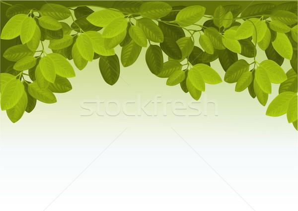 Nature lierre laisse vert design feuille Photo stock © jagoda