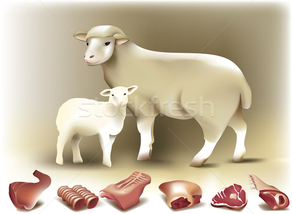 Sheep, lamb and mutton Stock photo © jagoda