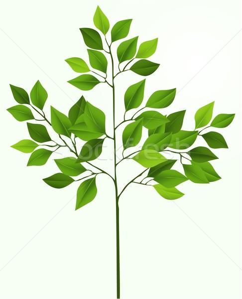 Foto stock: Ilustração · simples · vetor · árvore · abstrato · folha