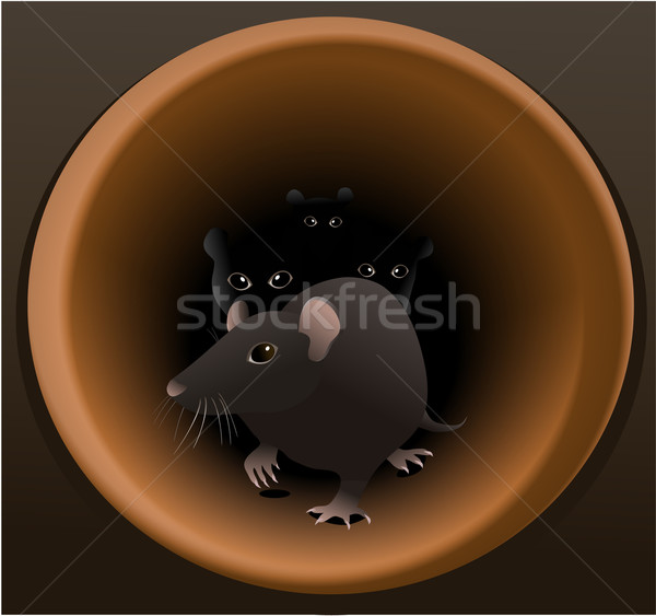 Rats Stock photo © jagoda