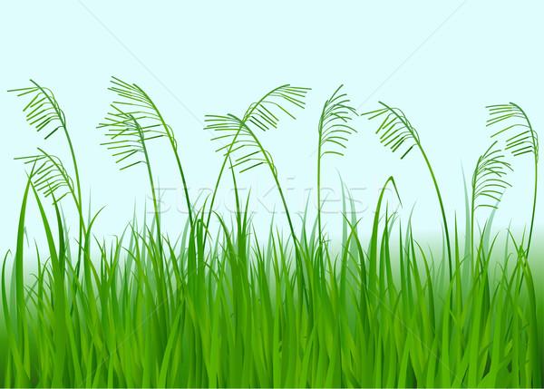 緑の草 自然 春 草 夏 フィールド ストックフォト © jagoda