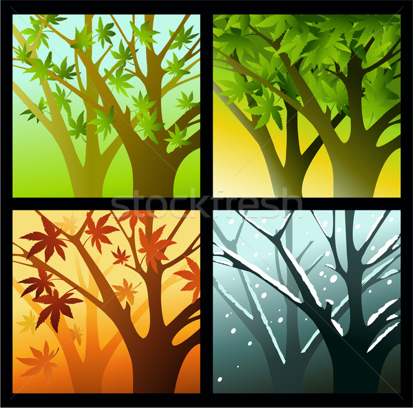 Cztery pory roku drzewo niebo charakter liści ogród Zdjęcia stock © jagoda