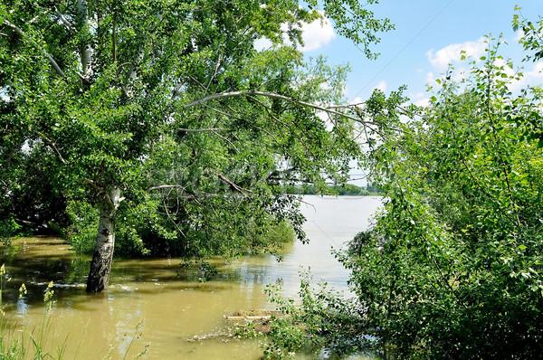 洪水 川 ドナウ川 ブダペスト ハンガリー ツリー ストックフォト © jakatics