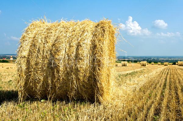 Straw rick on the field Stock photo © jakatics