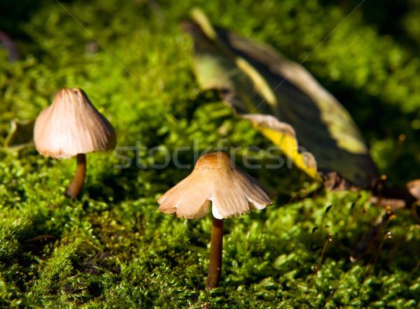 Mały grzyb rozwój mech świetle ogród Zdjęcia stock © jakatics