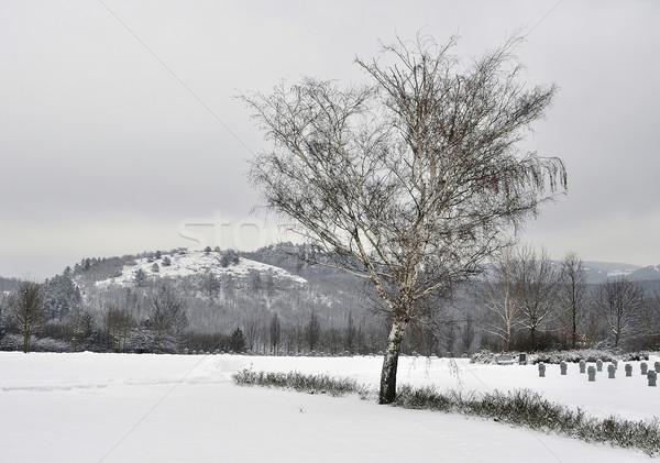 War cemetery in winter Stock photo © jakatics