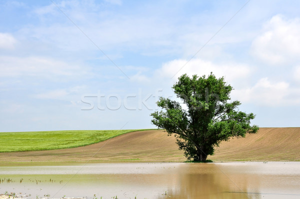 A tree in the inland water Stock photo © jakatics