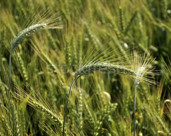 Bereich Farbe heißen Land Landwirtschaft Landwirt Stock foto © jakatics