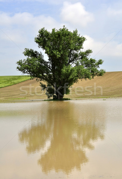 Tree in the inland water Stock photo © jakatics
