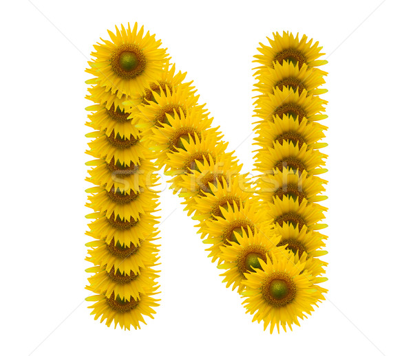 alphabet N, sunflower isolated on white background Stock photo © jakgree_inkliang