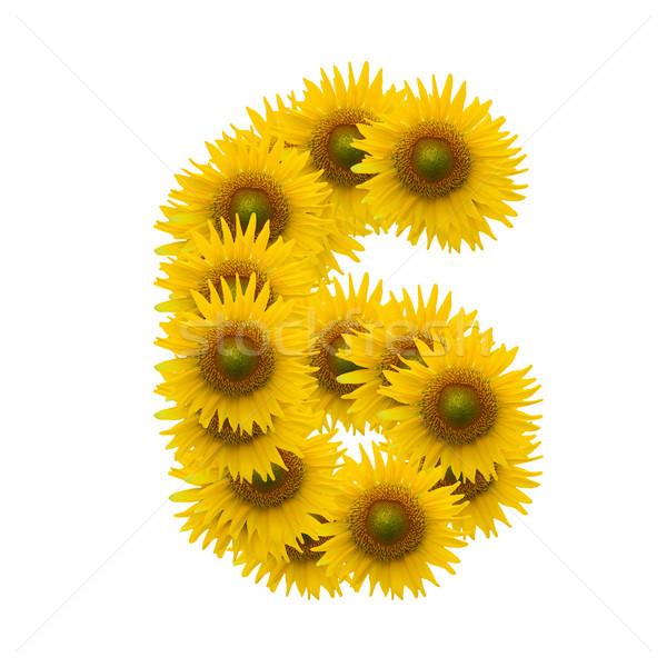 6, Sun flower alphabet isolated on white Stock photo © jakgree_inkliang
