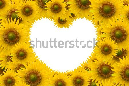 Güzel ayçiçeği uzay kalp şekli çiçek kalp Stok fotoğraf © jakgree_inkliang