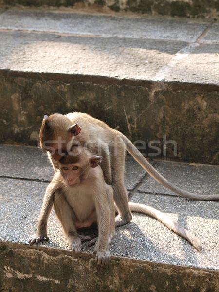 Genç maymun Taylandlı komik aile orman Stok fotoğraf © jakgree_inkliang