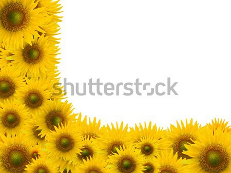alphabet L, sunflower isolated on white background Stock photo © jakgree_inkliang