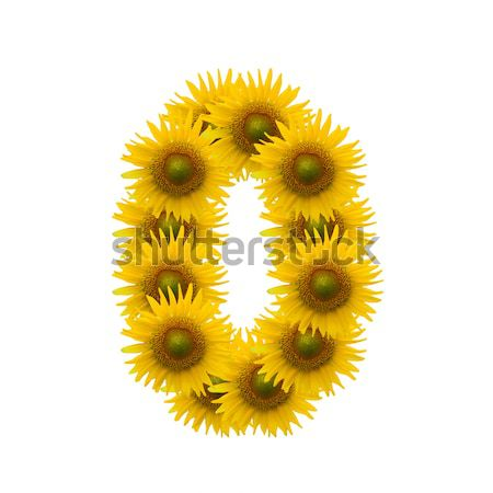 sunflower heart image isolate on white Stock photo © jakgree_inkliang