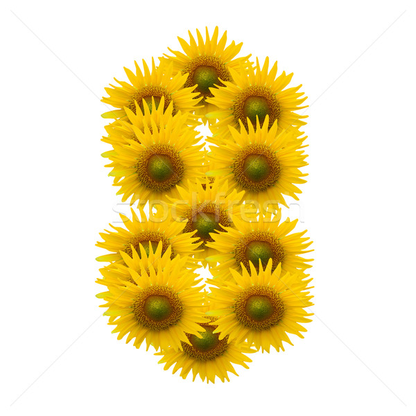 8, Sun flower alphabet isolated on white Stock photo © jakgree_inkliang