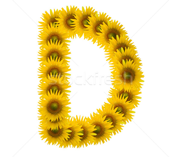 alphabet D, sunflower isolated on white background Stock photo © jakgree_inkliang