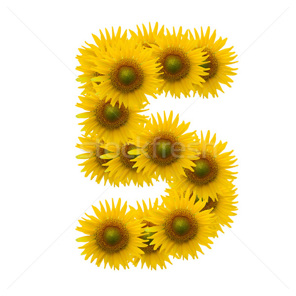 5,Sun flower alphabet isolated on white Stock photo © jakgree_inkliang