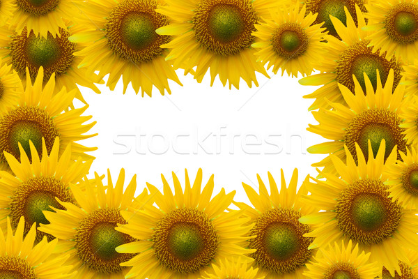sunflower on white space background Stock photo © jakgree_inkliang