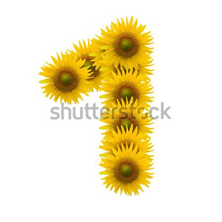 alphabet H, sunflower isolated on white background Stock photo © jakgree_inkliang