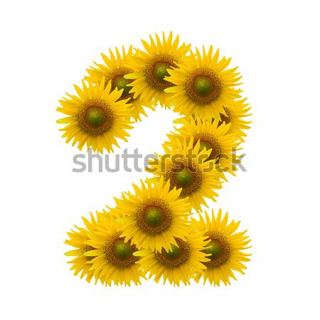 alphabet U, sunflower isolated on white background Stock photo © jakgree_inkliang