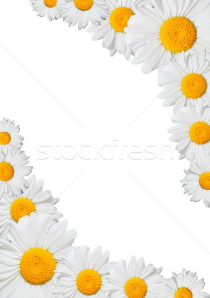Oxeye Daisies Frame Stock photo © jamdesign