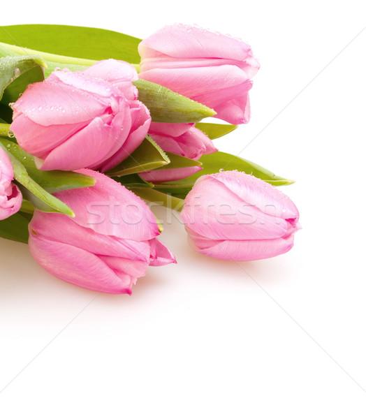 Tulips Stock photo © jamdesign