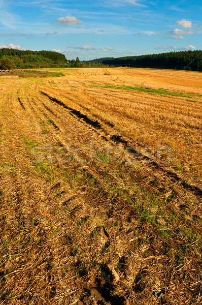 Harvested Agricultural Field Stock photo © jamdesign