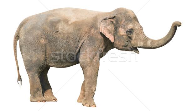 Stock photo: Baby Elephant