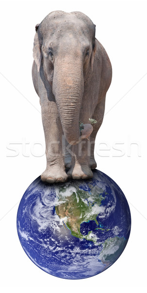 Elephant on Globe Stock photo © jamdesign