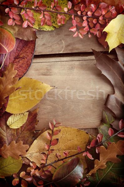 Automne frontière couleur arbre bois feuille Photo stock © jamdesign