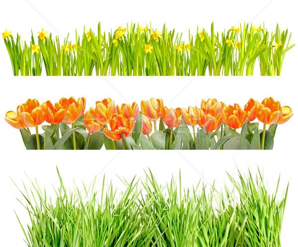 Flowers and Grass Stock photo © jamdesign