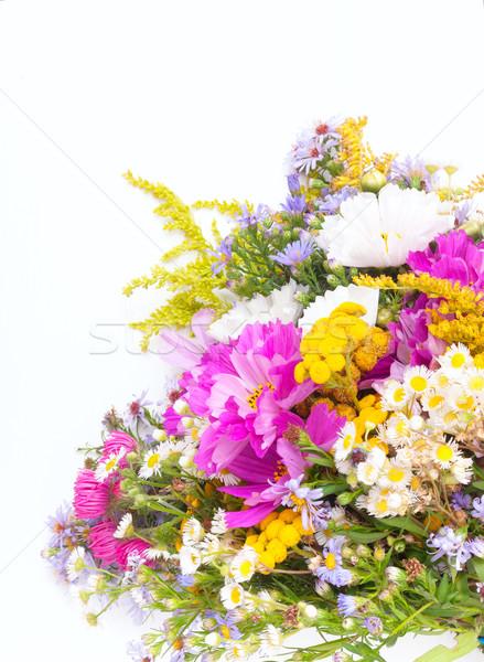 Wild Summer Flowers Stock photo © jamdesign