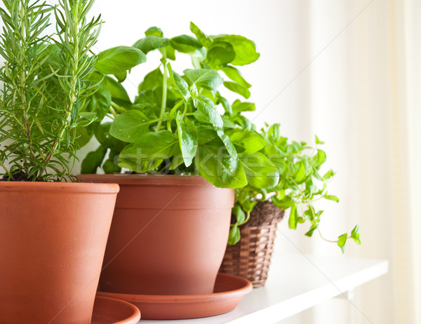 Rosemary, Basil and Mint in Pots Stock photo © jamdesign