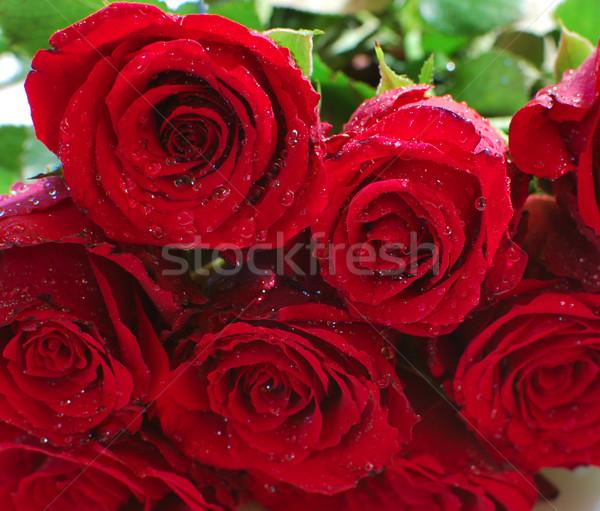 Rote Rosen Haufen Liebe stieg Blatt Rosen Stock foto © jamdesign