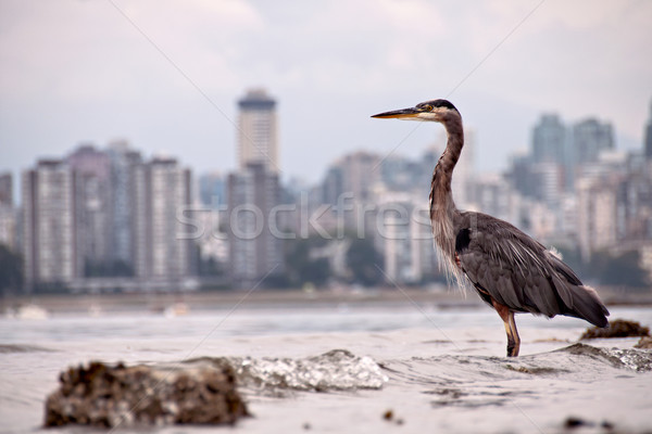 Heron In front of City Skyline Stock photo © jameswheeler